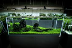 ADA Nature Aquarium Gallery | Flickr - Photo Sharing!