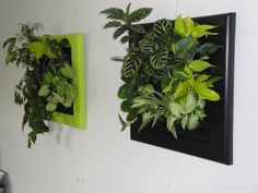 1000 images about jardin interieur on pinterest pin up for Mur vegetal interieur