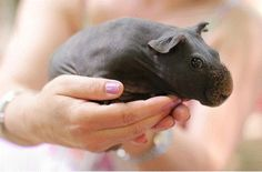 Baby Rhino HOLY CRAP I NEED IT