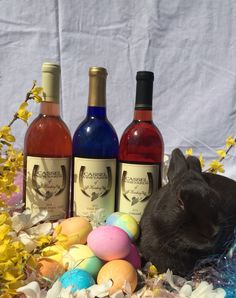 Happy Easter from Cassel Vineyards of Hershey.