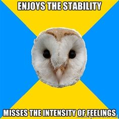 Bipolar Owl on intense feelings vs. stability