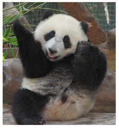 Animals doing Yoga!
