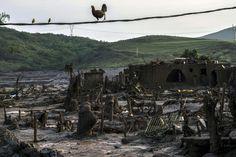 11 Désolation à Bento Rodrigues, le village brésilien enseveli jeudi par 55 millions de mètres cubes de déchets miniers boueux après la rupture d'un barragePhoto: AFP/Christophe Simon