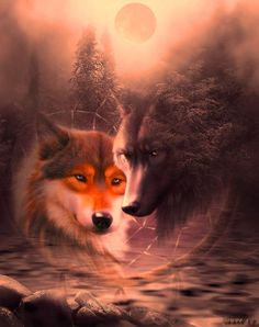 Beautiful wolves.