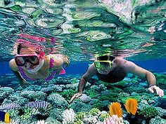Cozumel Colombia, Palancar Reef and Starfish Bay Snorkel Excursion