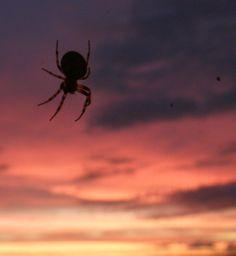 Araignée- Jolie tout de même.