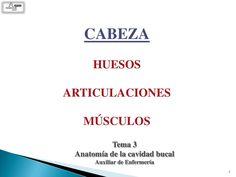 Cabeza: huesos articulaciones, musculos