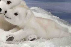 Kosen 6090 Arctic Fox Cub lying
