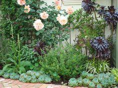 Succulent border