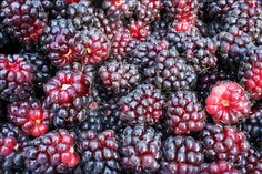 Boysenberry Jam « Hitchhiking to Heaven