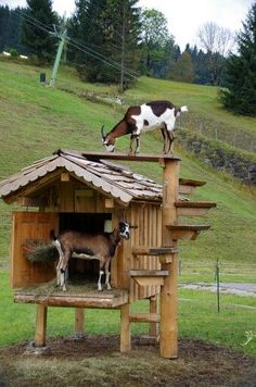 Salzkammergut Austria, by s.lo, I should build one of these for my goats. Then… Salzkammergut Austria, by s.lo, I should build one of these for my goats. Then I would have to get an Alpine and a Toggenburg. Goat Playground, Playground Ideas, Pallet Playground, Goat Shed, Goat Shelter, Sheep Shelter, Goat Barn, Raising Goats, Goat Farming