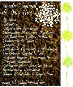 Aceite Esencial de Anis Verde Uso y Propiedades - Club Salud Natural