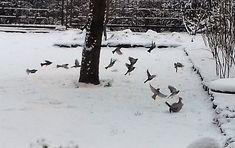Még a tél az úr… - Németh György – Kerepes, 473