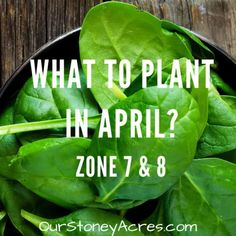 What seedlings can you start in January?- Zones 5 & 6 - Our Stoney Acres - Modern Design Building A Raised Garden, Raised Garden Beds, Raised Gardens, Growing Shallots, Canned Pickled Beets, Everbearing Strawberries, Growing Green Beans, Vegetable Planting Guide, Cucumber Trellis