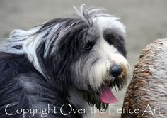 Dog Photography Bearded Collie Dog  in Black by overthefenceart, $5.00