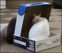 cat trapping other cat inside a box gif