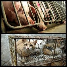 opposed to animal testing When people hear the words animal testing they usually think of cosmetics and shampoo, not institutions of higher learning after all, shouldn't these bastions of civility know better.