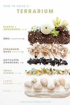 How to build a terrarium -- for your wedding centerpieces or favors! ~ No sé para qué se usa esto en una boda, pero bueno, está chulo.
