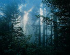 dark forest - Pesquisa Google