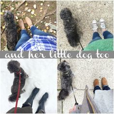 a little love for my little dog { and how the blog got it's name!} – And Her Little Dog Too #dogsaremore #ic #ad
