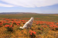 Breathtaking Photos Capture a Dog's Adventures in the Most Beautiful Places in the USA John Stortz and his rescued husky Wolfgang document their travels across the American southwest. Animals And Pets, Cute Animals, Baby Animals, Howleen Wolf, Catty Noir, Studio Ghibli Movies, Cat Dog, Beautiful Creatures, Animal Kingdom