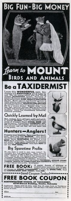 "1930s ad says, ""Learn to mount birds and animals.""   +++   There is big fun in taxidermy????"