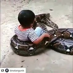 That's Great 707 Giant Animals, Cute Baby Animals, Animals And Pets, Funny Animals, Cute Animal Memes, Cute Animal Videos, Funny Weird Facts, Cute Snake, Dangerous Animals