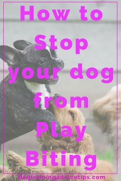 How to Stop your Dog from Play Biting   Dog Training Tips   Dog Obedience Training   Stop Puppy Biting   Puppy Biting Prevention   http://www.dogtrainingadvicetips.com/stop-dog-play-biting