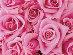 Google Image Result for http://3.bp.blogspot.com/-S6QwvIeUNKo/TygTfZuL2mI/AAAAAAAAHTg/6WqUO0p6jNU/s1600/Beautiful_Pink_Flowers.jpg