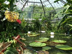 Image detail for -Tropical & Alligator Garden by in Atagawa Tropical & Alligator Garden ...
