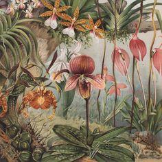 Orchids Lithograph Lito Litho Concrete Matter Amsterdam Vintage