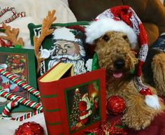 AIREDALE TERRIER reading: 'Twas the night before Christmas' . . .