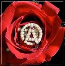 AOII rose