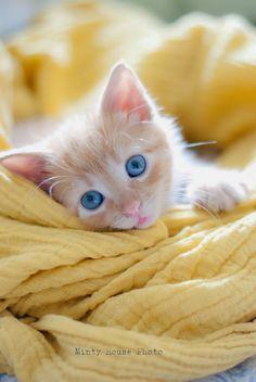 Gorgeous coloured orange and white kitten.