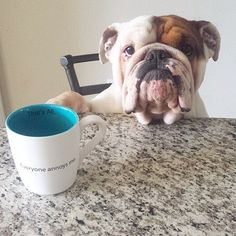 Dog sitting at table.  English Bulldog      ........................................................ Please save this pin... ........................................................... Because for real estate investing... Click on this link now!  http://www.OwnItLand.com