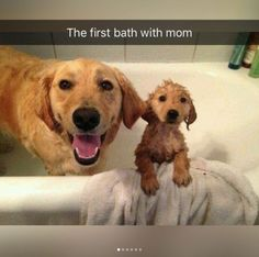 bath time! <3  ---  Minipet Online Pet Boutique is a Melbourne-based for small dogs, cats and their human guardians. WE SHIP WITHIN 24 HOURS! $9.95 FLAT RATE SHIPPING AND SHIPPING IS FREE FOR ALL ORDERS OVER $50