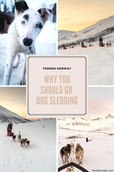 De 27 beste bildene for Norway Travel   Things To Do In