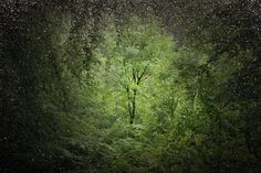 Photographer Ellie Davies works in the woods and forests of Southern England. She gained her MA in Photography from London College of Communication in 2008.