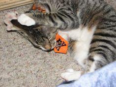 I'M NOT A FANCY CAT, GET IT OFF!!!