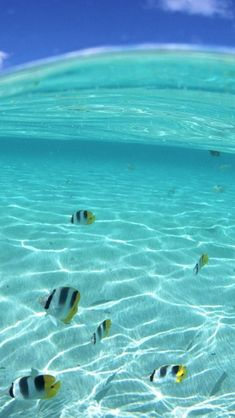 Fish, Underwater, Tropical, Sea, Hawaii