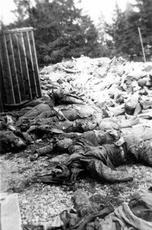 Dachau, May 1945, SS soldiers killed by inmates during the liberation.