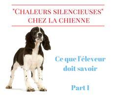 """La vérité sur les """"chaleurs silencieuses"""" chez la chienne : ce que tout éleveur doit savoir (Part I) - PROGRAMME PRIVILÈGE ÉLEVEURS"""