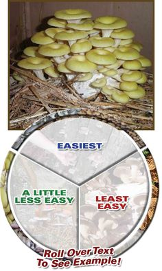 Field And Forest Products, Inc. - Level of Difficulty  for growing mushrooms  (this looks very doable, does require some wait time, but I think affordable to try on a small scale)