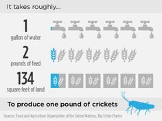 Can a palm weevil cure world hunger? - CNN.com