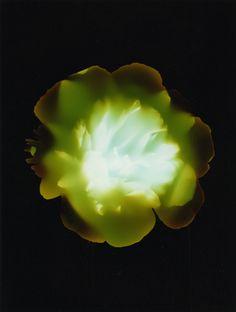 bloom14