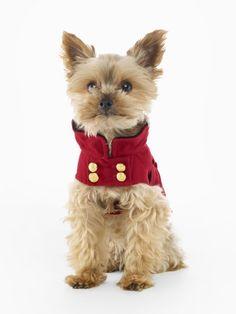 doggy holiday wear