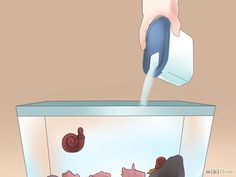 How to Take Care of an Aquatic Snail: 6 Steps (with Pictures)