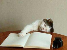 me canse de estudiar....