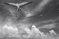 PAPAHANAUMOKUAKEA | WAYNE LEVIN IMAGES
