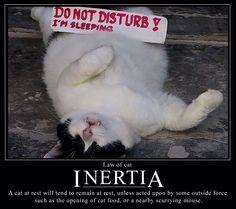 Cat Law of Inertia